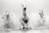 horses-photo